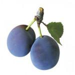 プルーンを何個食べれば便秘が改善される?【妊婦さんも必見】