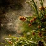 【咳にくしゃみ】秋でも花粉症が原因?鼻水などの症状が起きる