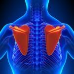 肩甲骨のコリの原因と解消法!【頭痛や吐き気も出ることも?】